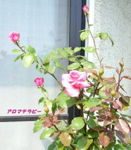 P1120504ブログ