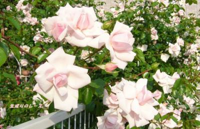 P1120559 花