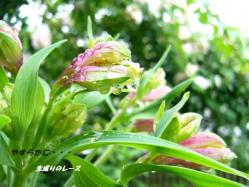 P1120576 花