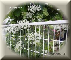 P1120580 花