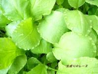 P1120478野菜