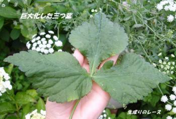 P1120628花
