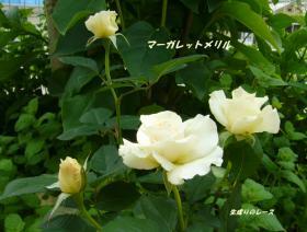 P1120639花