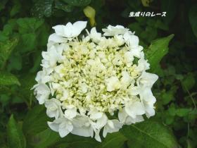 P1120644花