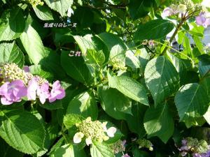 P1120651花