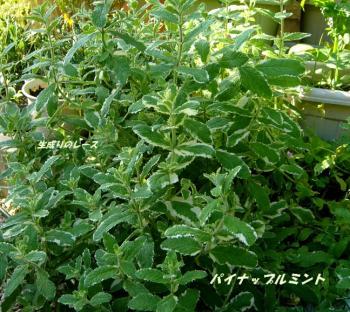 P1120652花
