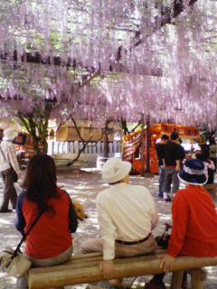 2008_0504プチお花見 0103