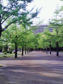 2008_0512プチお花見 0178