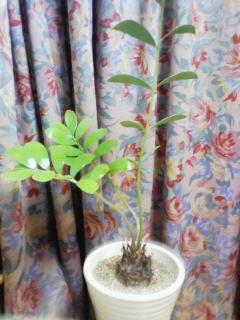 2008_0603プチお花見 0263