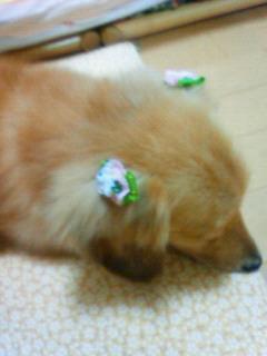 2008_0730プチお花見 0013