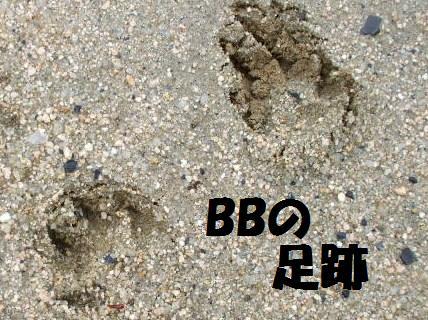 BBの足跡