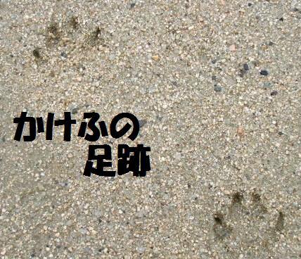 かけふの足跡