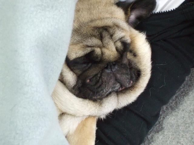 毛布被って