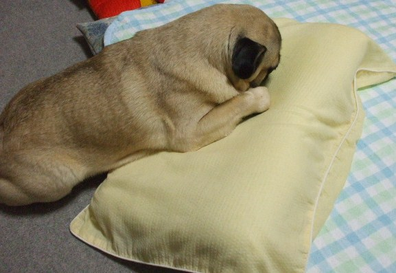 枕にBB?