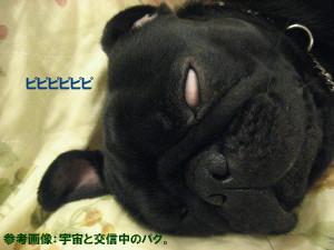 IMG_0418_6.jpg