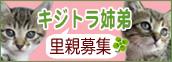 kijitora_k.jpg