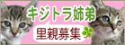 kijitora_ks.jpg
