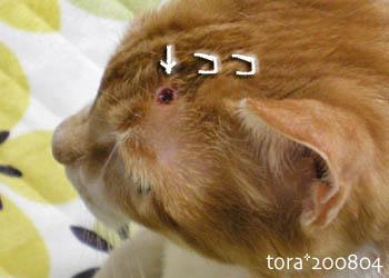 tora08-04-124.jpg