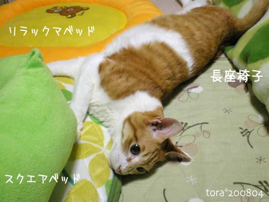 tora08-04-143.jpg