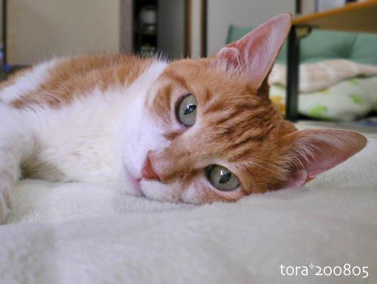 tora08-05-127.jpg
