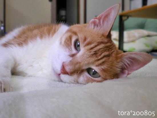 tora08-05-128.jpg
