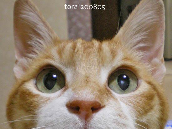 tora08-05-154.jpg