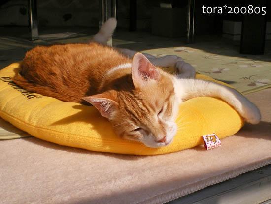 tora08-05-176.jpg