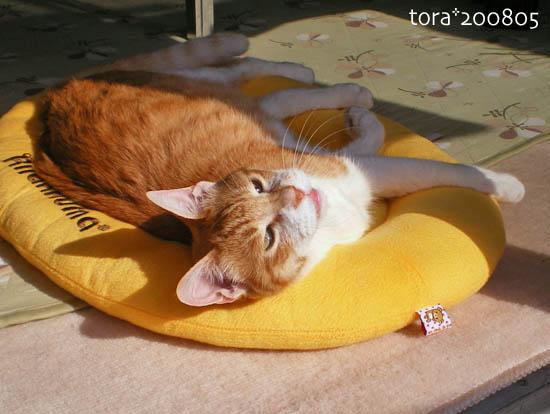 tora08-05-177.jpg