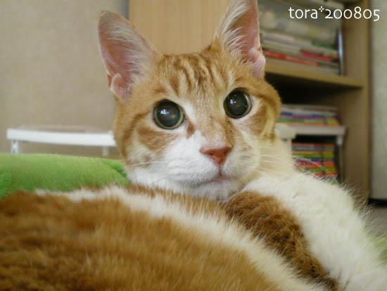 tora08-05-195.jpg