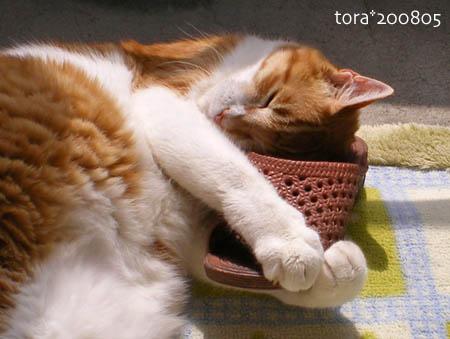 tora08-05-213s.jpg