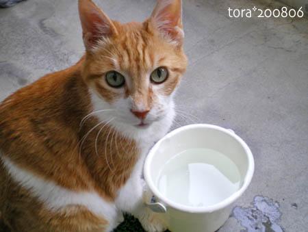 tora08-06-106s.jpg
