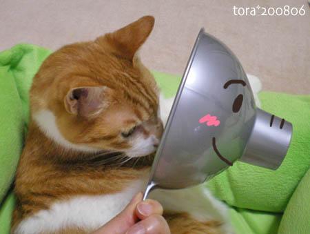 tora08-06-11s.jpg