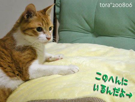 tora08-06-193s.jpg