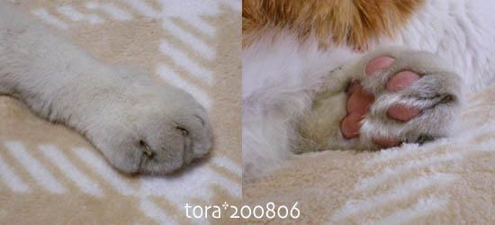 tora08-06-4.jpg