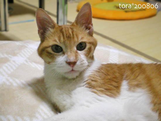 tora08-06-51.jpg