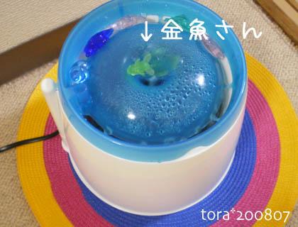 tora08-07-123.jpg