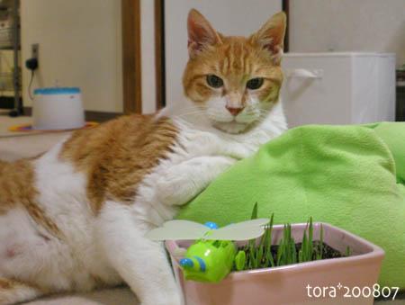 tora08-07-139s.jpg