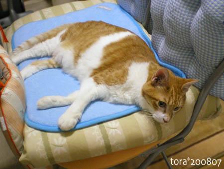 tora08-07-164s.jpg