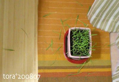tora08-07-177.jpg