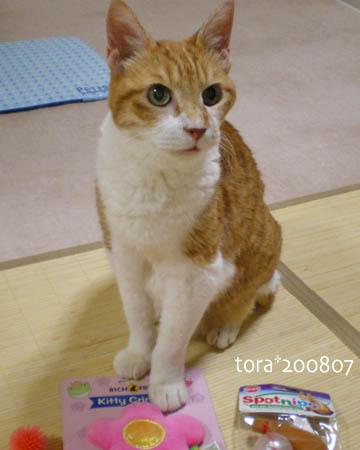 tora08-07-191s.jpg