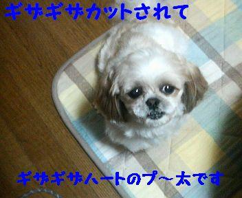 200803312320002.jpg