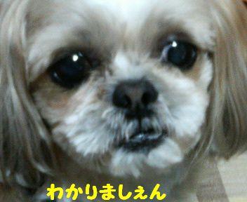 200804092050001.jpg