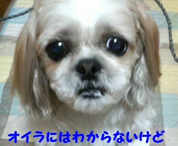 200804162308000.jpg