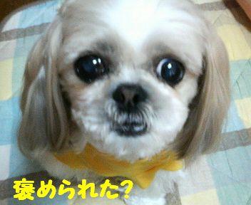 200804201147001.jpg