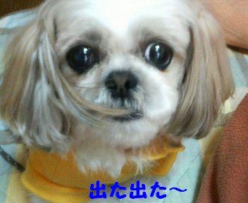 200804201456000.jpg