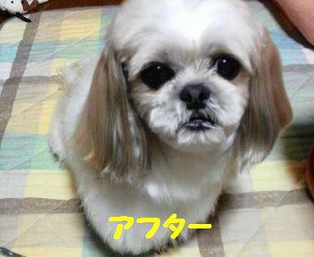 2008051320400000.jpg