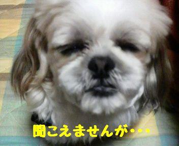 2008051919220001.jpg