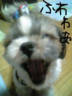 こどもの日2