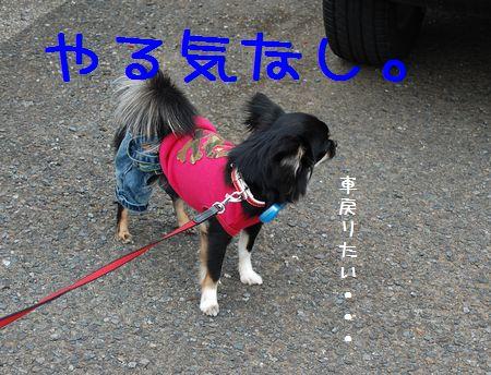 001_20080426191427.jpg