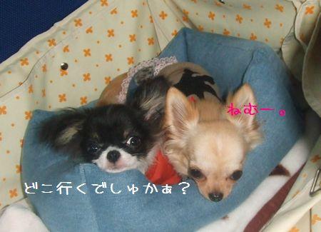 003_20080503201923.jpg
